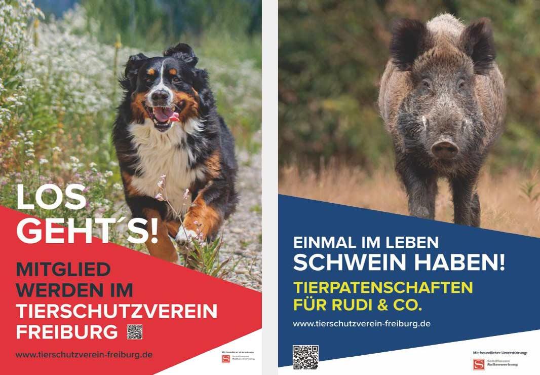 Plakatmotiv Hund und Schwein für Tierschutzverein Freiburg